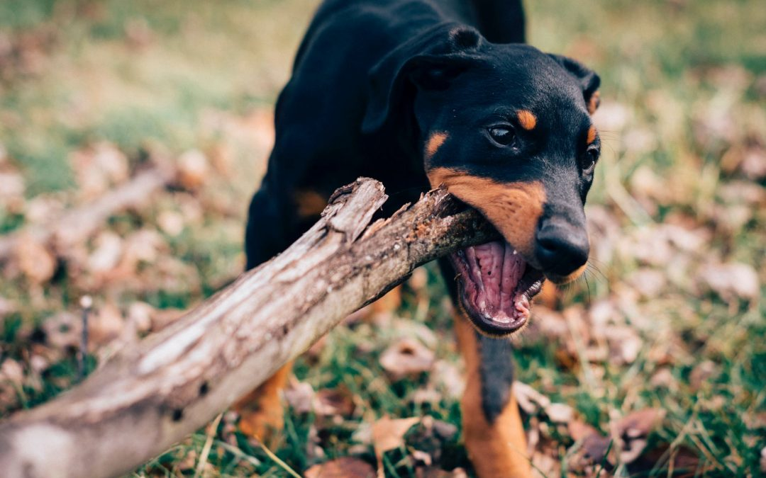 What is the law about dog bites in California?